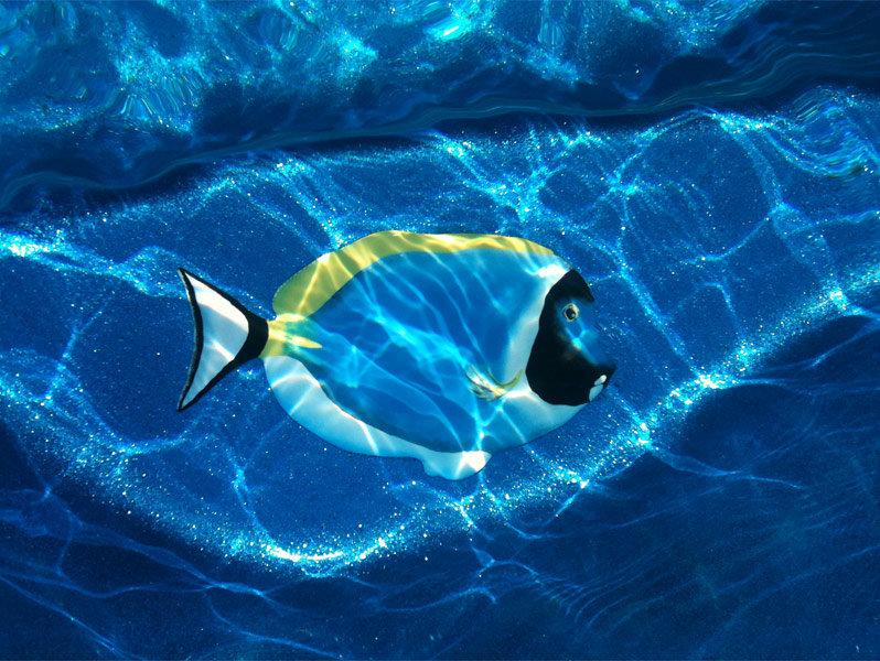 картинки рыба в бассейне бурятии